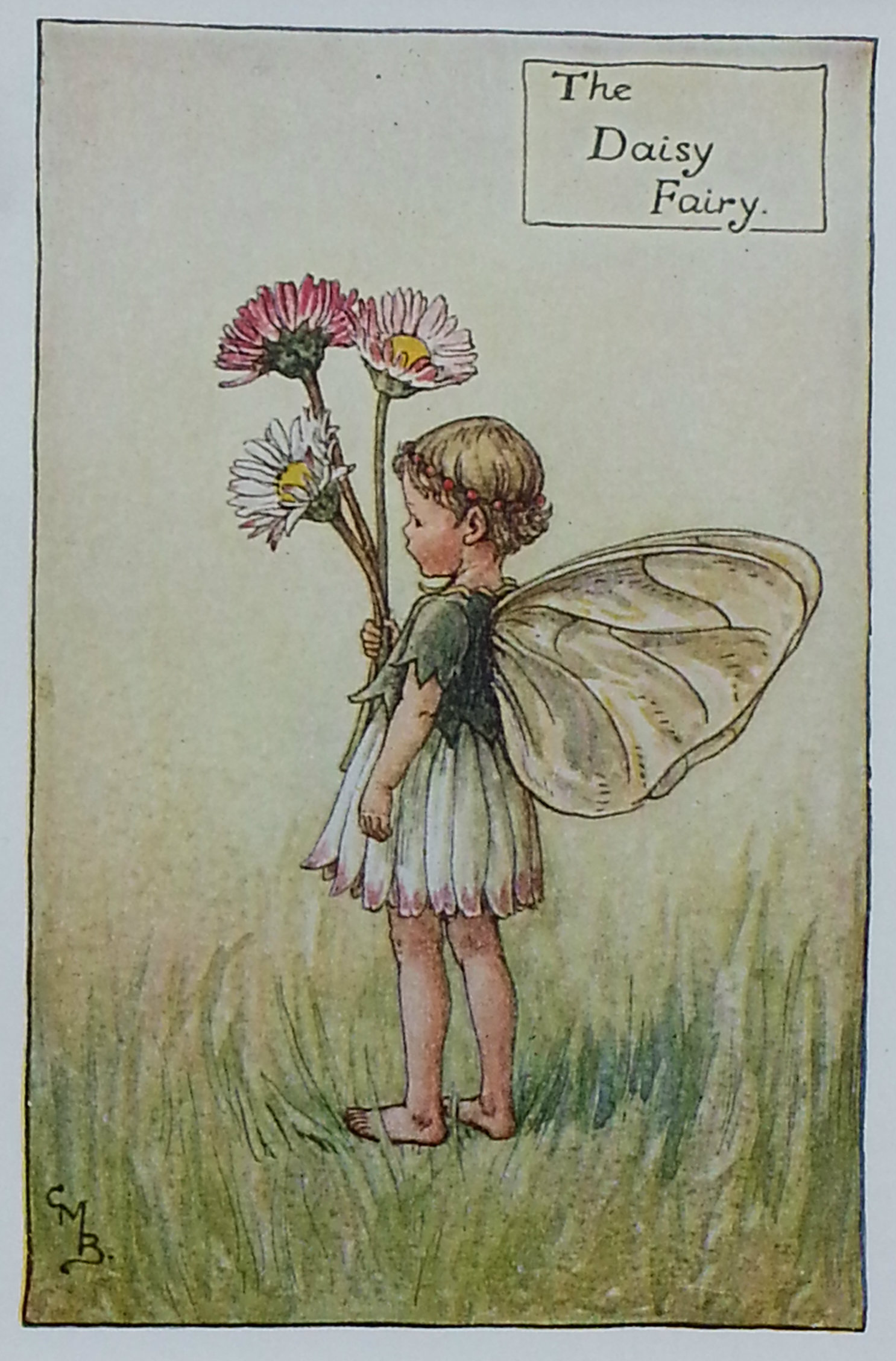 The daisy flower fairy titania vintage prints the daisy flower fairy izmirmasajfo Gallery